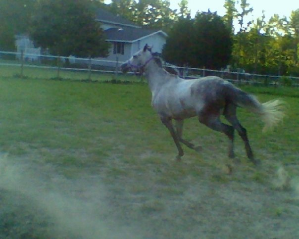 Stella running
